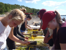 Students and teachers tie eelgrass to grids