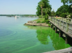 St. Johns River algal bloom