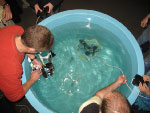 Participants trying out ROVs at Family Science Weekend