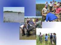 Researchers and teachers checking on fyke nets, revealing wetland health and the presence of invasive species