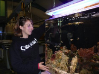Developing an interpretive tour of aquarium husbandry