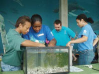 Mentors from Hampton University prepare a seagrass display