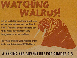 Watching Walrus poster