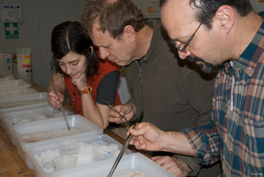 Zooplankton sorters, hard at work. (photo by Debbie Nail Meyer)