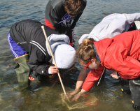 Measuring eelgrass